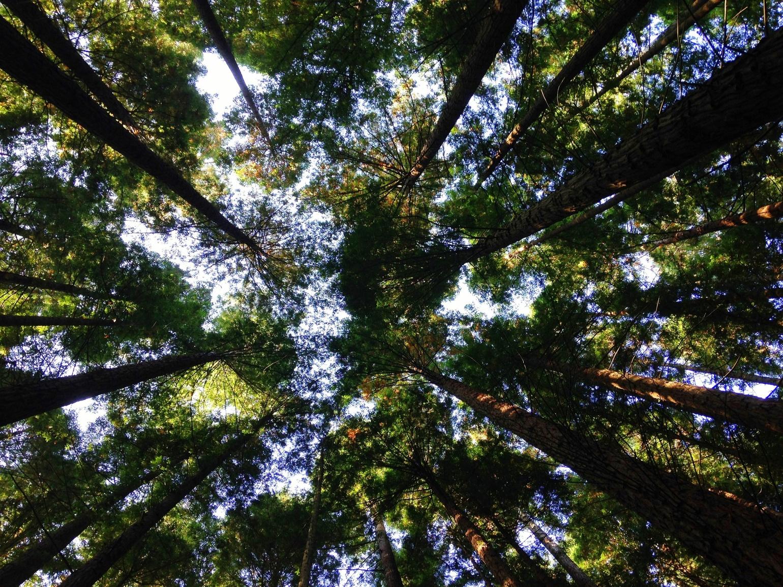 Unsplash-trær & himmel-Angela Benito